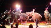 cirkus hrvatska