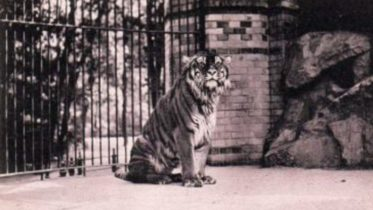 kaspijski tigar