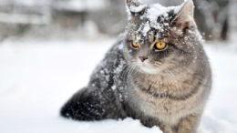 maca na snijegu