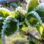 Prvi mraz u Lici, a kad se to dogodi baš na blagdan sv. Mateja ima i značenje u pučkoj meteorologiji